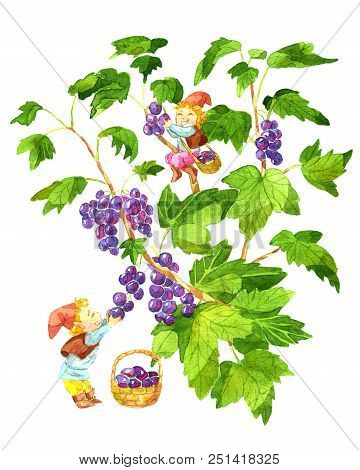 Two funny little gnomes gathering currant berries in the garden. Watercolor cartoon clip art illustration, doodle hand drawn graphic isolated on white stock photo