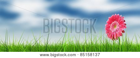 Concept or conceptual green fresh summer or spring grass field and a flower over a blue sky backgrou