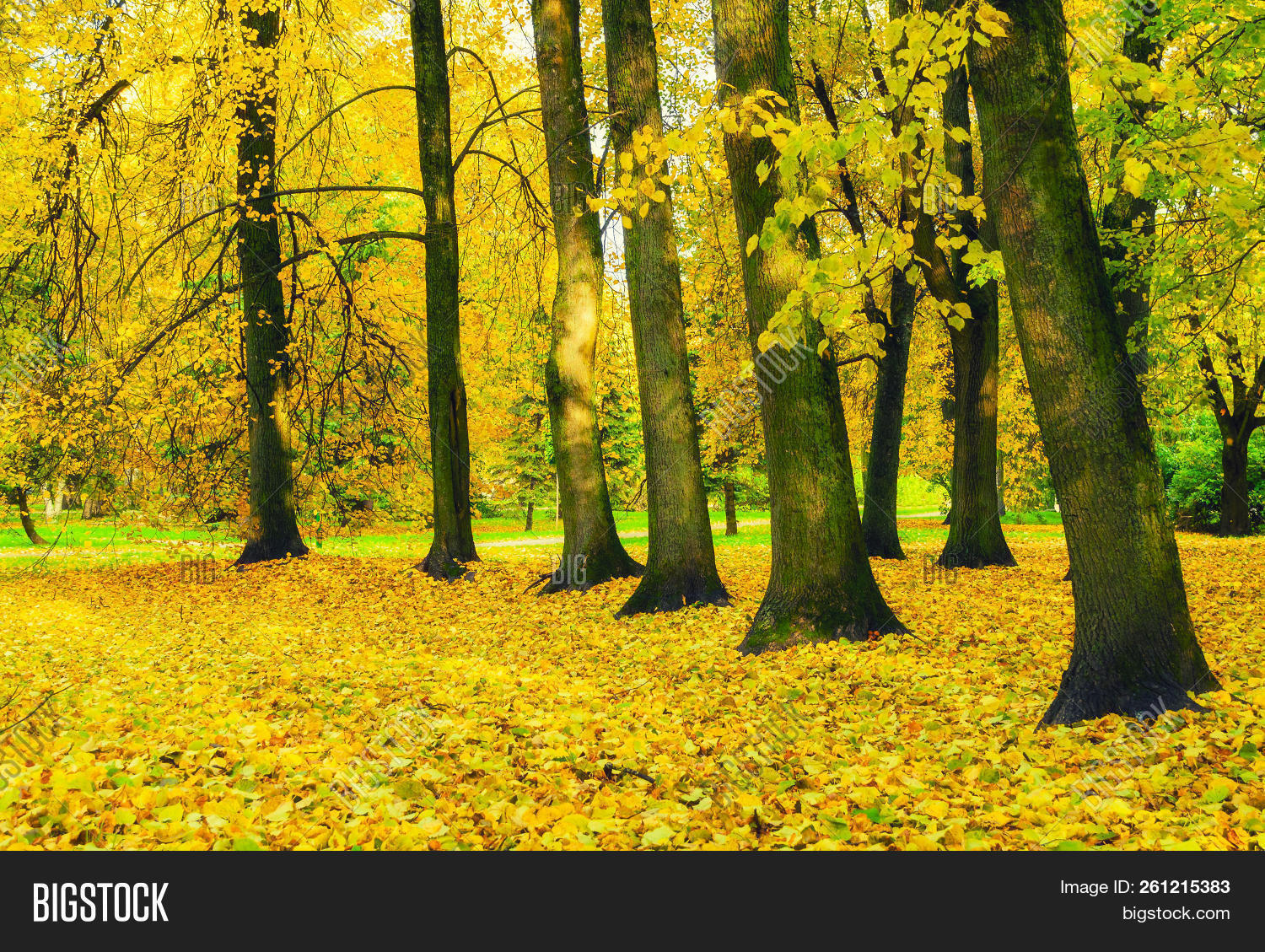 November,October,September,autumn,autumnal,background,bright,cloudy,deciduous,fall,foliage,forest,gold,golden,grass,grove,landscape,lawn,leaves,light,maple,nature,nobody,oak,old,orange,park,picturesque,red,rural,scene,scenery,sun,sunny,tree,view,weather,yellow,fall-forest,fall-landscape,fall-nature,fall-scene,fall-trees,fall-background,fall-leaves,fall-park,fall-outdoors,fall-leaf,fall-alley,fall-sunset