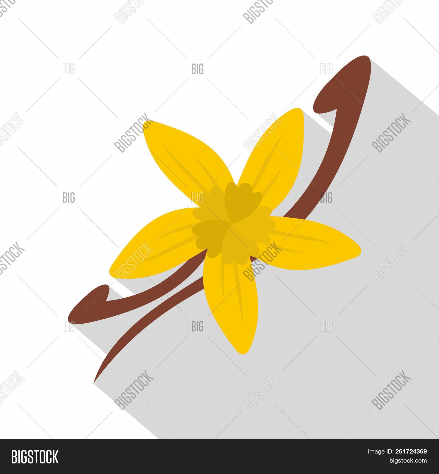 Vanilla Pods And Flower Icon Flat Illustration Of Vanilla Pods