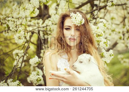 Young woman with beautiful face and long curly hair in glamour dress holding cute white small goat in lush blooming garden stock photo