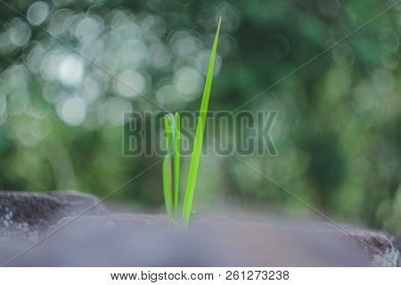 Grass. Fresh green grass with dew drops closeup. Sun. Soft Focus. Abstract Nature Background stock photo