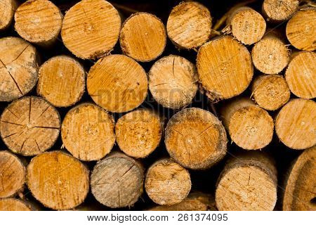 Wooden logs. Timber logging in autumn forest. Freshly cut tree logs piled up as background texture stock photo