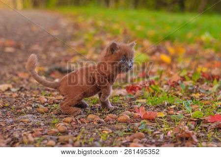 Little kitten on a walk on the grass. The kitten is walking. Pet. . Fluffy smoky cat with a haircut. Groommer haircut cat. stock photo