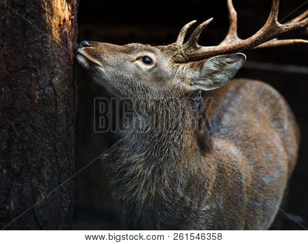 Deer close-up, beautiful young deer with horns near the tree stock photo