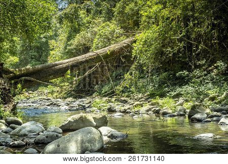 Large tree trunk fallen across a gentle flowing stream. Surrounding green vegetation imparts a sense of tranquility. stock photo