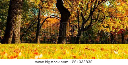 Fall trees with yellowed foliage in sunny October park lit by sunlight. Colorful fall landscape, panorama of fall park in sunny fall weather, fall nature view
