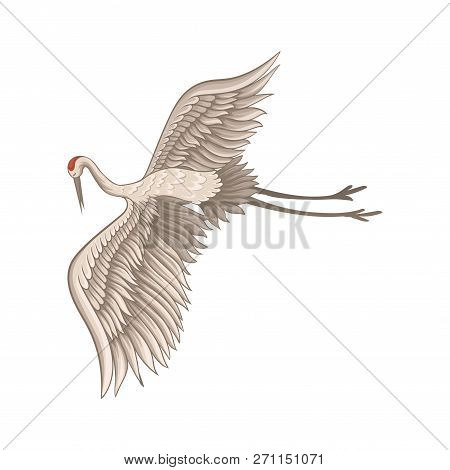Lovely red-crowned crane flying with wide open wings. Bird with long thin beak, legs and neck. Flat vector design stock photo