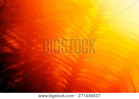 abstract warm blurred background dawn in the jungle, the sun shines through the branches of tropical plants stock photo