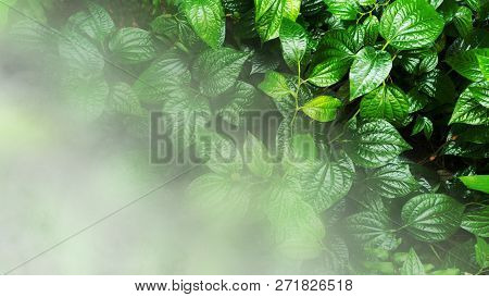 Vertical garden with tropical green leaf with fog and rain. stock photo