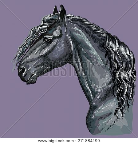 Colorful hand drawing portrait of Friesian horse. Horse head  in profile isolated vector hand drawing illustration on purple background stock photo