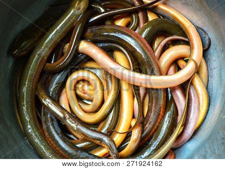 long eel swamp / thai eel fish in sale at local market stock photo