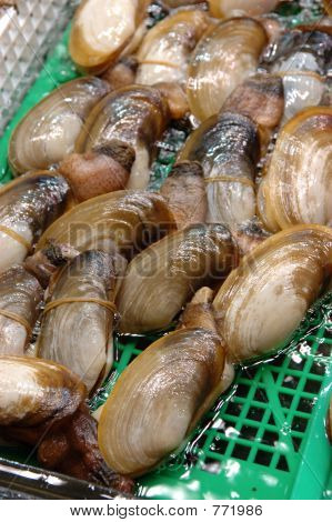 Seafood: Live elephant trunk clam stock photo