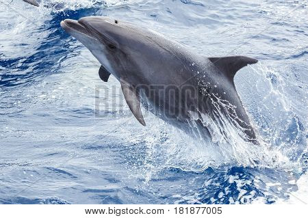 Dolphin jumping out of the water near the ship in the ocean