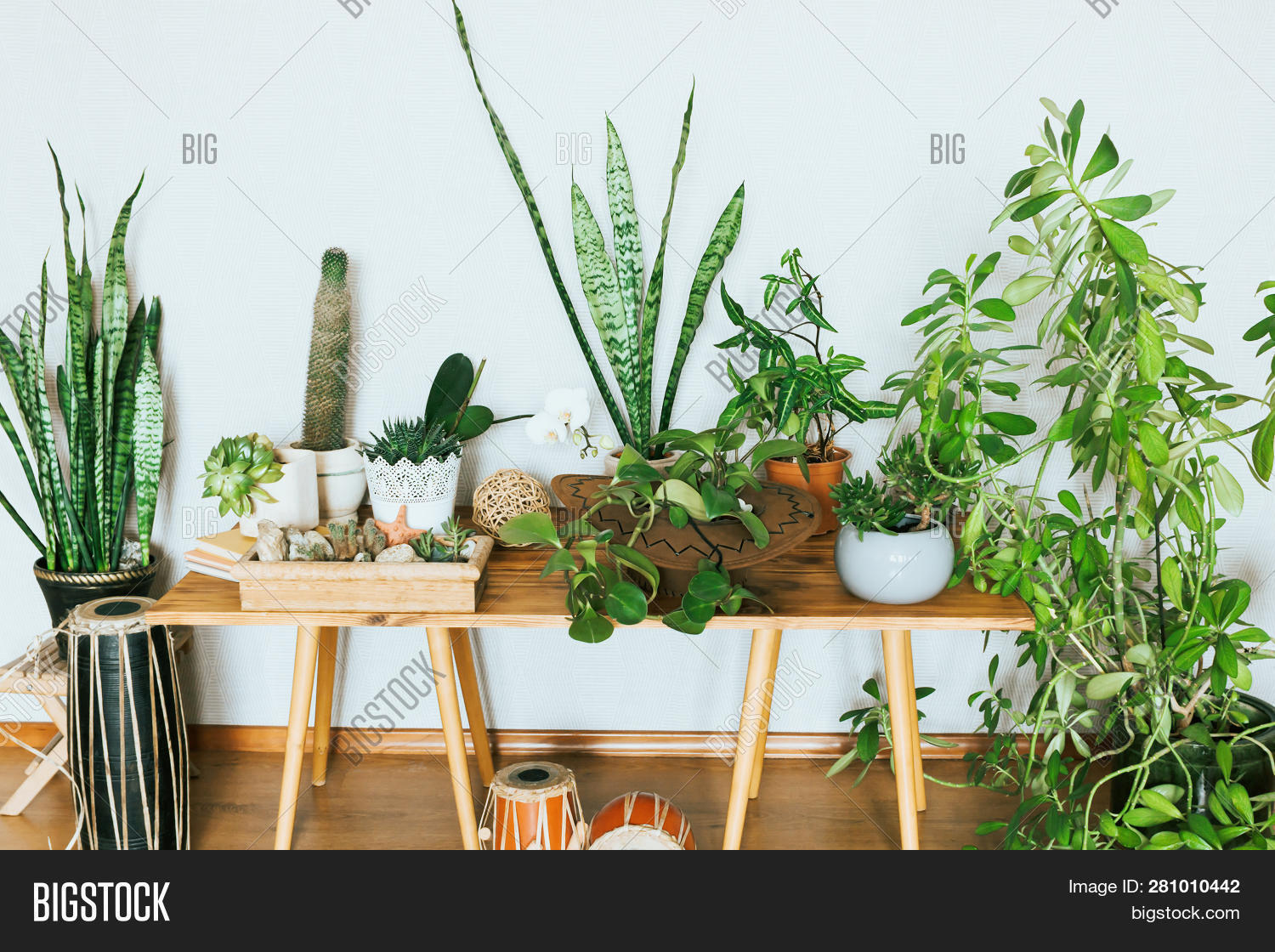apartment,background,beautiful,botanical,botany,cacti,cactus,cozy,decor,decoration,design,flora,flower,fresh,furniture,garden,green,home,house,houseplant,indoor,interior,leaf,living,modern,natural,nature,plant,pot,room,scandinavian,shelf,space,style,succulent,table,tropical,wall,white