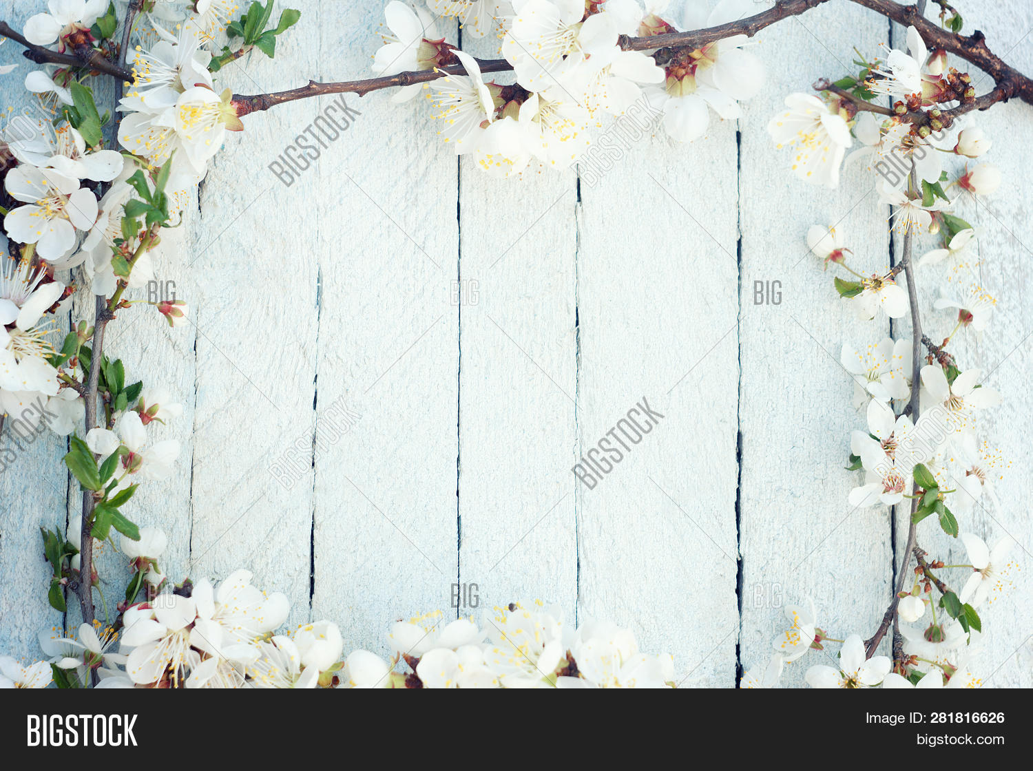 april,aroma,art,background,beautiful,beauty,blossoms,border,cherry,closeup,composition,concept,copy,design,display,floral,flower,frame,fresh,garden,gardening,green,image,leaves,march,natural,nature,old,petal,picnic,pistil,plum,product,pure,rustic,shelf,soft,space,spring,summer,tabletop,texture,tree,twig,up,view,white,wood,wooden,zen