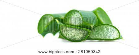 Aloe Vera closeup.  Aloevera natural organic renewal cosmetics, alternative medicine. Skin care concept. Isolated on white background. stock photo