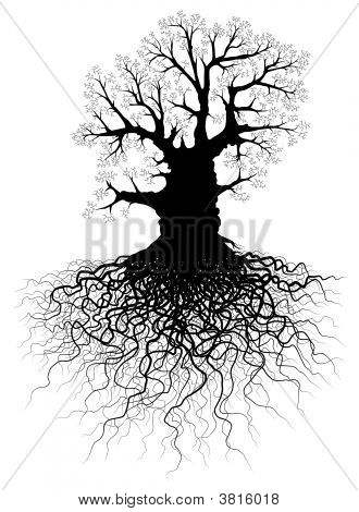 Editable vector illustration of a leafless oak tree with root system stock photo