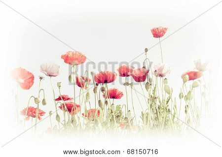 Abstract Floral Background In Vintage Style For Greeting Card. Wild Poppy Flowers On Summer Meadow.