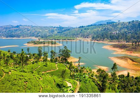 Tea plantation and Maskeliya Dam Lake or Maussakelle reservoir near Nuwara Eliya in Sri Lanka. Nuwara Eliya is the most important place for tea production in Sri Lanka. stock photo