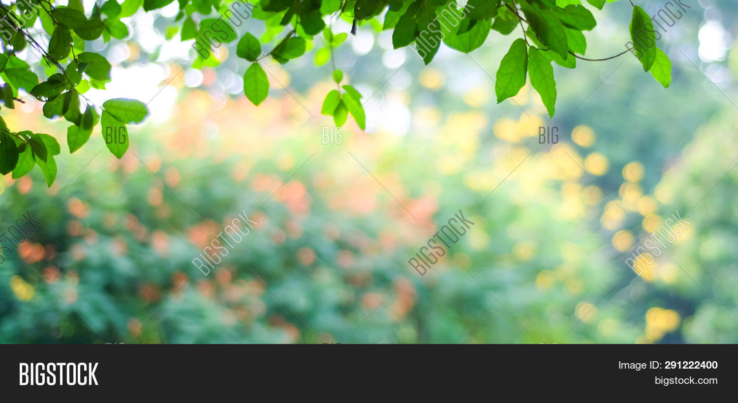 abstract,art,backdrop,background,banner,beautiful,blossom,blur,blurred,bokeh,branch,bright,color,concept,countryside,cover,day,design,eco,ecology,environment,field,flower,foliage,forest,frame,fresh,garden,green,growth,landscape,leaf,light,lush,nature,outdoors,park,plant,poster,relaxation,season,space,spring,summer,texture,tranquility,tree,vacation,wallpaper
