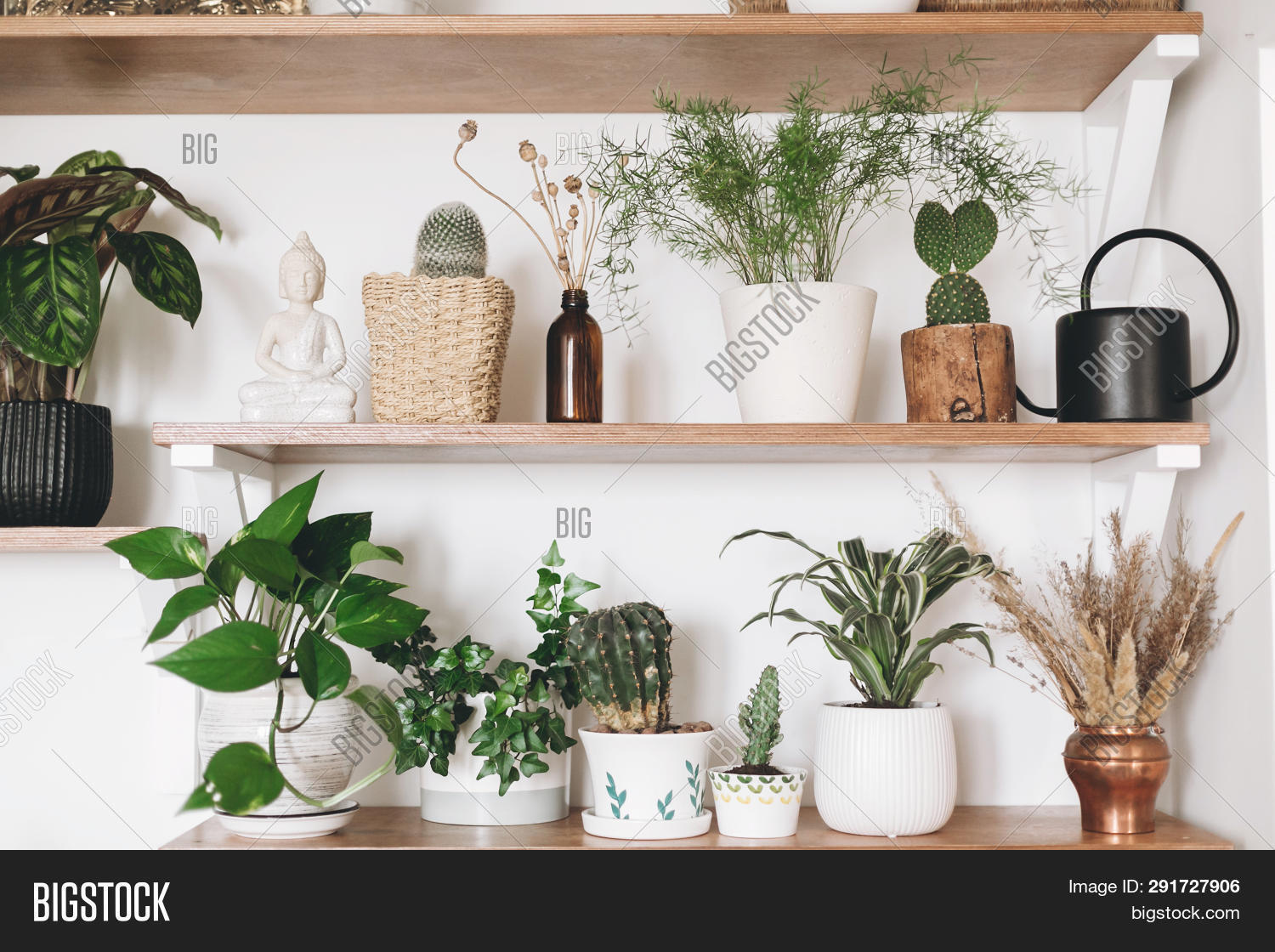 apartment,asparagus,black,boho,botany,cactus,calathea,can,concept,decor,decoration,decorative,design,dracaena,dried,epipremnum,floral,flowerpot,fresh,funnel,gardening,green,hipster,home,house,houseplant,indoor,interior,ivy,many,modern,natural,nature,palm,plants,pothos,pots,room,scindapsus,set,shelves,space,stylish,succulent,trendy,wall,watering,white,wildflowers,wooden