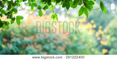 Nature Background, Blur Green Tree Park Outdoor With Bokeh Light Background, Banner Spring And Summe