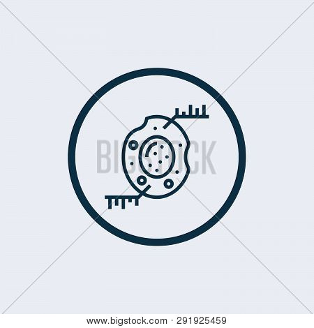 Animal cell structure with: nucleus, mitochondria, membrane, centrosome, ribosome, smooth and rough endoplasmic reticulum, black and white Vector. line icon. stock photo