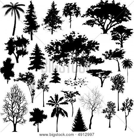 Detailed vectoral silhouettes of different types of trees. stock photo