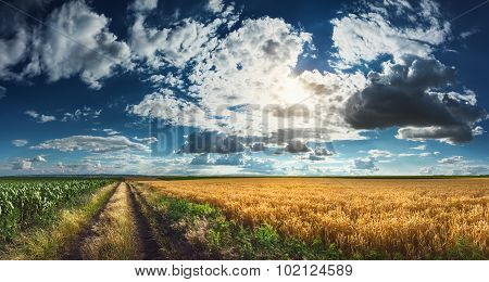Wheat And Corn Fields Before Harvest