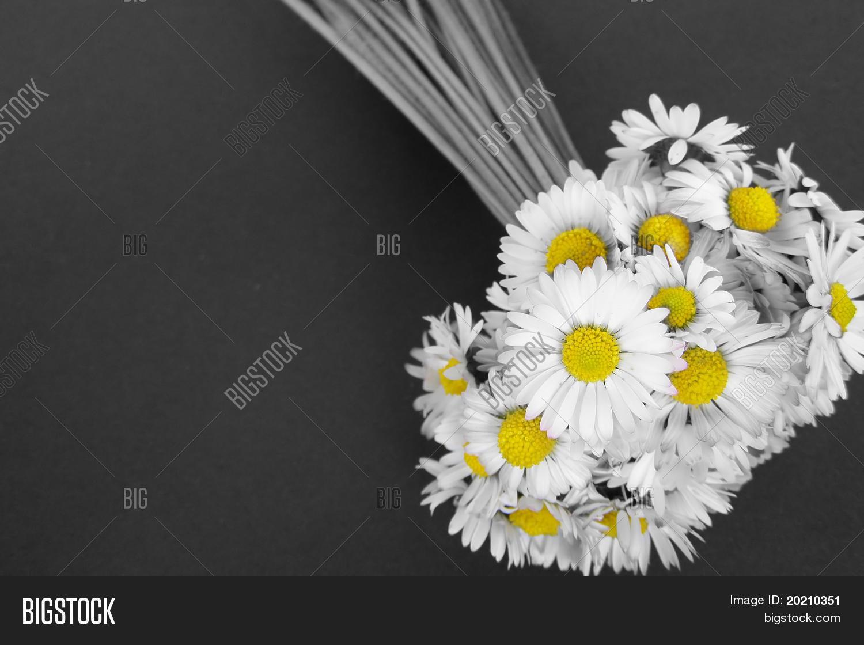 Daisy Flowers Photo Stock