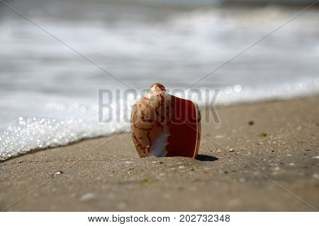 shell ashore in waves of sea in sunset stock photo