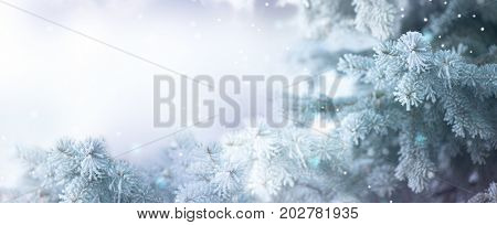Winter Tree Holiday Snow Background. Snowflakes. Blue spruce, Beautiful Christmas and New Year Xmas