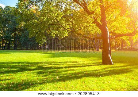 Autumn trees in the park in nice sunny autumn weather. Autumn landscape scene with autumn maple tree in the autumn park. Sunset autumn landscape view. Colorful autumn nature stock photo