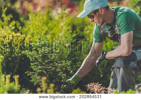 Gardener Planting New Trees in the Clients Garden. Gardening and Landscaping Theme.