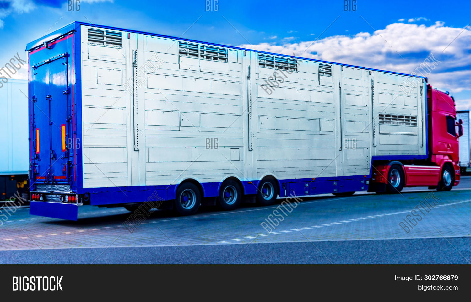 A Trailer Animal Transport . Special Truck And Trailer For Transportation Of Pigs . Transport Of Liv