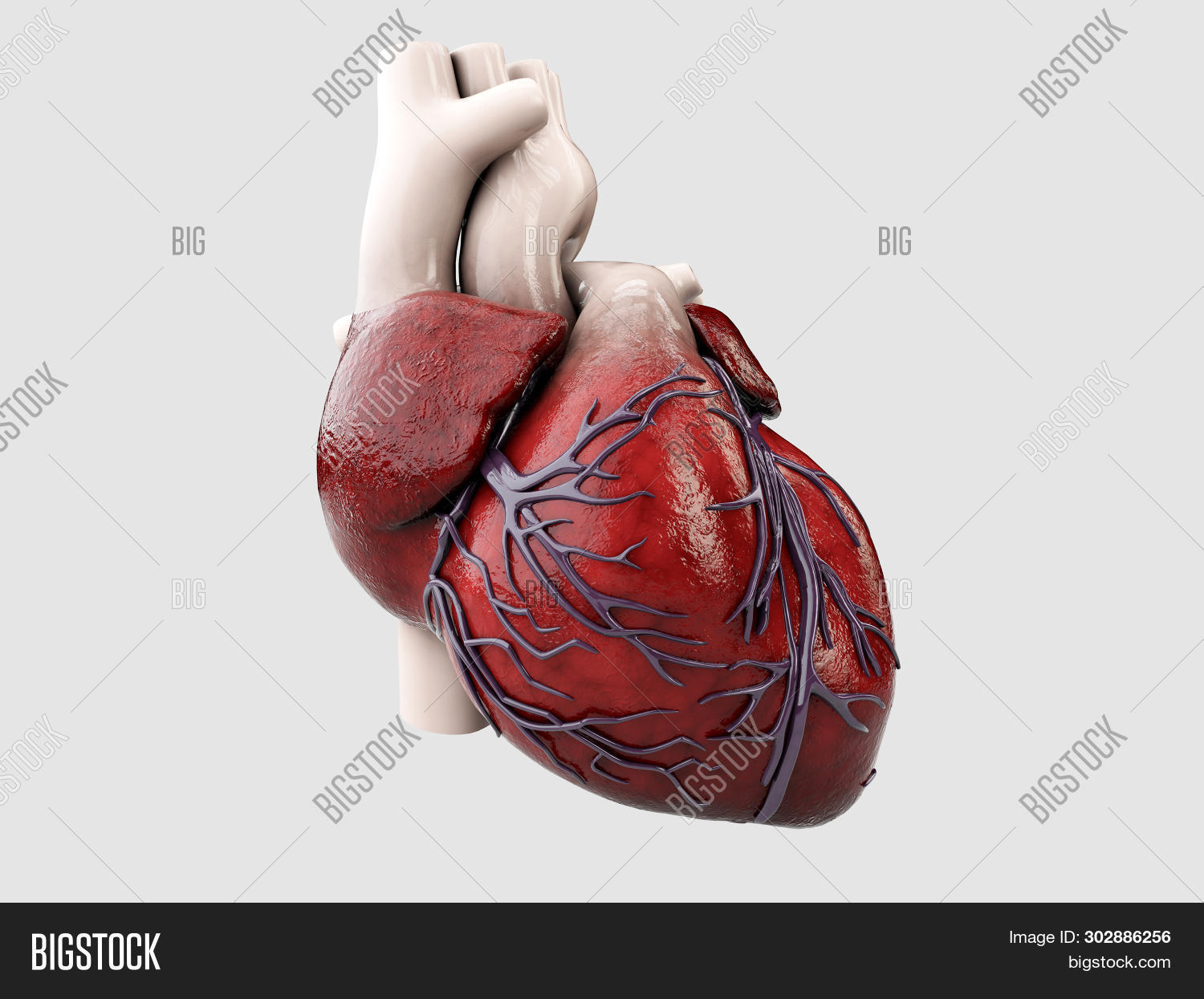 3drendering,anatomy,backgrounds,biology,black,blue,body,brain,cardiology,cerebellum,cerebral,coronary,cortex,face,glowing,head,headache,health,health-care,heart,human,illness,illustration,inflammation,inside,intelligence,life,male,medical,medicine,men,nervous,organ,pain,people,person,physiology,ray,real,red,rendering,scan,science,skeleton,skull,spine,stress,system,transparent,x-ray