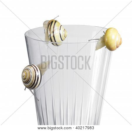 studio photography of some Grove snails while creeping on the edge on a drinking glass in white back stock photo