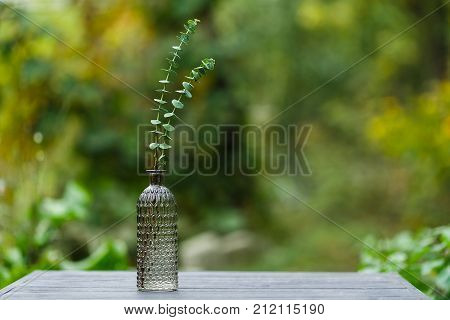 Eucalyptus in a glass vase on the table stock photo