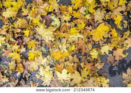 Autumn scene in the hills of Petrin Park in Prague stock photo
