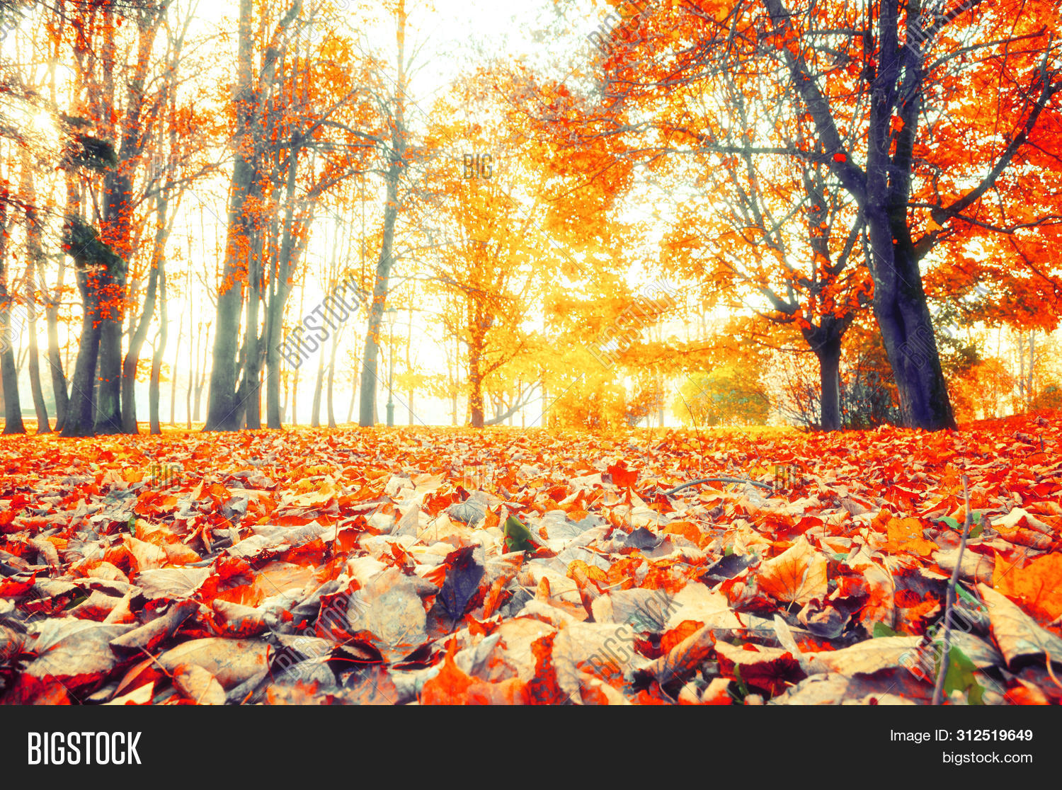 November,October,September,alley,autumn,beautiful,bright,city,cloudy,day,dry,fall,fallen,foliage,footpath,foreground,forest,gold,grove,landscape,leaves,lonely,nature,panorama,park,path,red,fall-forest,fall-landscape,fall-nature,fall-scene,fall-trees,fall-background,fall-leaves,fall-park,fall-outdoors,fall-leaf,fall-alley,fall-sunset,russian,scene,season,soft,stunning,tree,view,wallpaper,weather,yellow,yellowed