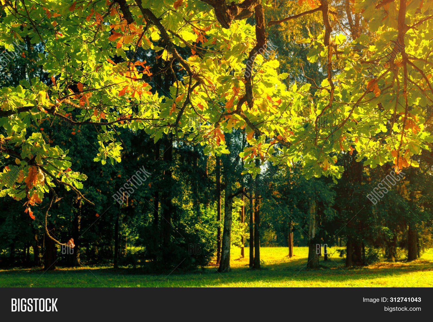 November,October,September,autumn,autumnal,background,bright,deciduous,fall,foliage,forest,gold,golden,grove,landscape,leaf,leaves,light,nature,nice,oak,orange,outdoors,park,picturesque,fall-forest,fall-landscape,fall-nature,fall-scene,fall-trees,fall-background,fall-leaves,fall-park,fall-outdoors,fall-leaf,fall-alley,fall-sunset,season,sprawling,sun,sunbeam,sunlight,sunny,sunrise,sunset,tree,view,weather,yellow,yellowed