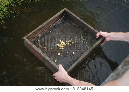 Sifting soil in water through the grate in search of the gold concept. stock photo