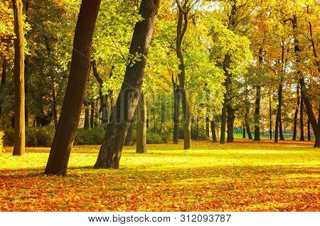 Autumn landscape scene with golden autumn trees in city autumn park. Colorful autumn trees in the park in sunny weather