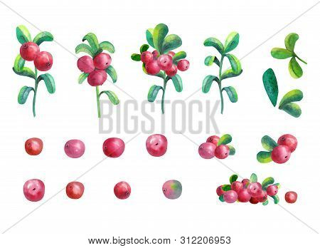 Ripe berry cowberry on white background is isolated. Clipart. Watercolor illustration. stock photo