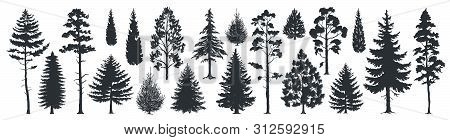 Pine tree silhouettes. Evergreen forest firs and spruces black shapes, wild nature trees templates. Vector illustration woodland trees set on white background stock photo