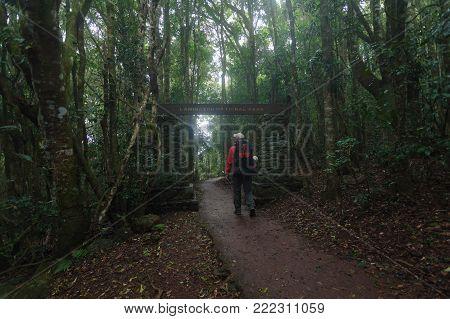 Hike along Toolona Creek Circuit in Lamington National Park, Gold Coast, QLD, Australia stock photo