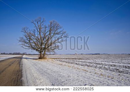 A tree all alone on a lonely country road in the winter