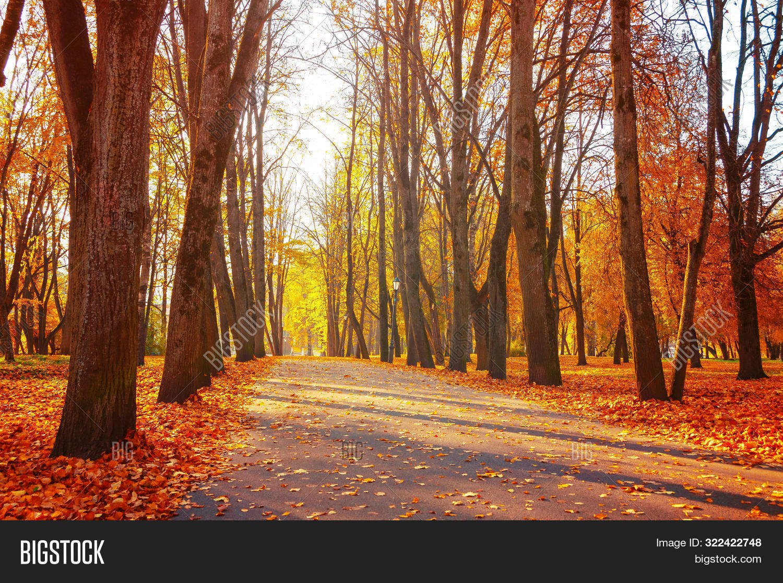 November,fall-October,September,fall-alley,autumn,fall-background,fall-city,evening,fall,fallen,falling,fall-foliage,gold,golden,fall-ground,fall-landscape,leaf,leaves,fall-maple,nice,orange,fall-outdoors,fall-park,path,red,fall-road,row,fall-scene,fall-season,seasonal,fall-street,sun,fall-sunlight,sunny,fall-sunrise,fall-sunset,fall-town,tree,fall-walkway,wallpaper,fall-weather,yellow