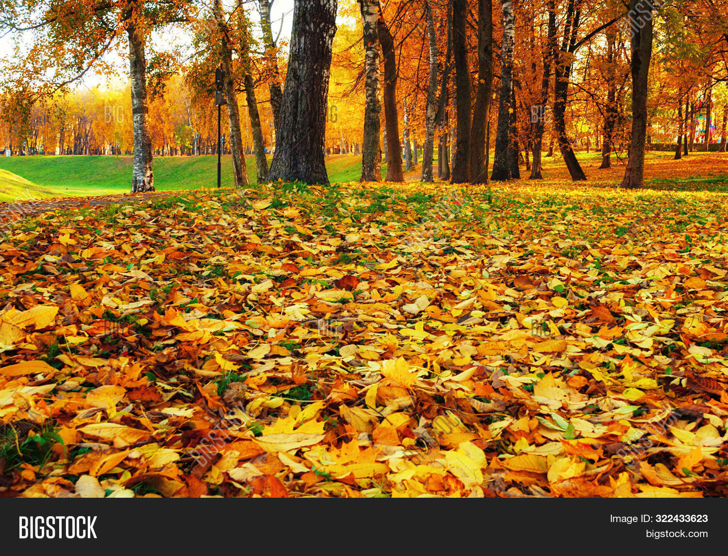 November,fall-October,fall-Russia,fall-September,autumn,autumnal,fall-background,bright,fall-city,fall,fallen,falling,fall-foliage,gold,golden,fall-ground,fall-grove,fall-landscape,lawn,fall-leaves,light,fall-maple,fall-nature,orange,fall-outdoor,fall-park,picturesque,red,fall-season,fall-street,fall-sun,fall-sunbeam,fall-sunlight,sunny,fall-sunrise,fall-sunset,fall-tree,urban,fall-view,fall-weather,yellowed